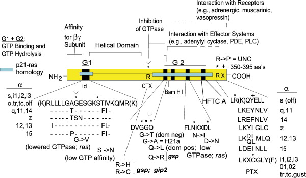 Expansion Of Signal Transduction By G Proteins The Second 15