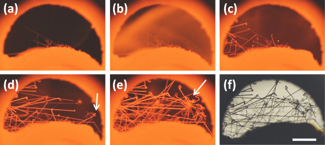 Snapshots of the in-situ observation of the growth of silicon wires. (a) before, ...