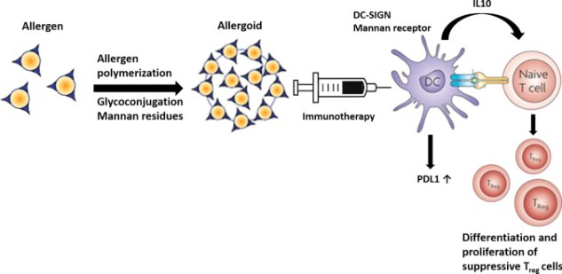 Advances and highlights in allergen immunotherapy: On the way to sustained  clinical and immunologic tolerance - ScienceDirect