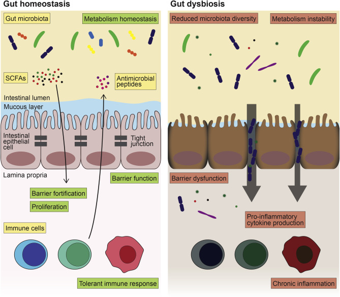 The microbiome: An emerging key player in aging and longevity -  ScienceDirect