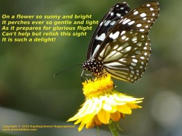 Butterfly_share