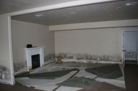 Mold Pic 3