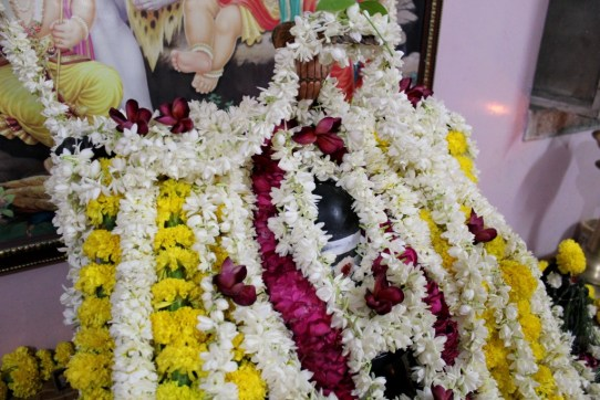 011 Shivashambho!.JPG