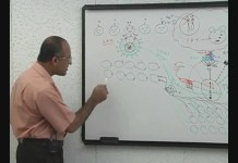 T Helper Cells - Immunology - Part 9