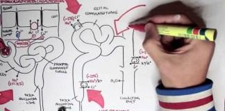 Pharmacology - Diuretics