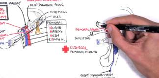 Clinical Anatomy - Lower Limb (Bones), Inguinal ligament, Hip, Knee and ankle Joints