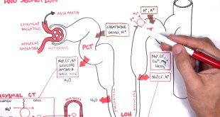 Nephrology - Physiology Reabsorption and Secretion
