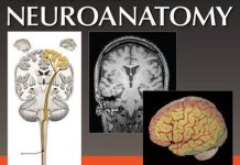 Atlas of Functional Neuroanatomy 3rd Edition PDF
