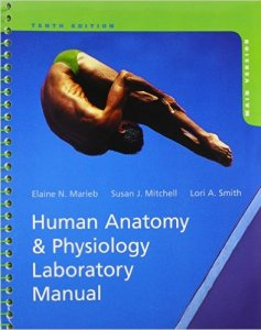 Human Anatomy & Physiology Laboratory Manual 10th Edition PDF