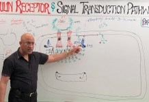 Insulin Receptors & Signal Transduction Pathways