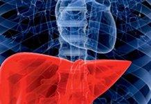 Essential Topics in Liver Regeneration PDF