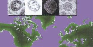 Arenaviruses I - The Epidemiology Molecular and Cell Biology of Arenaviruses PDF