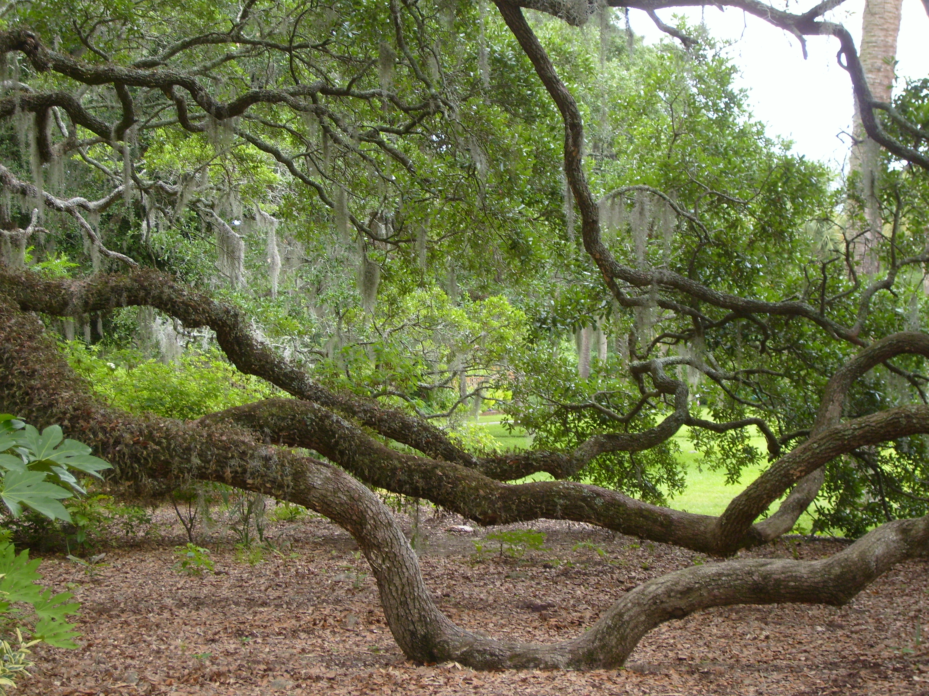 verdant overgrowth