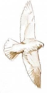 Come Disegnare Gli Uccelli In Lontananza Come Disegnare Un