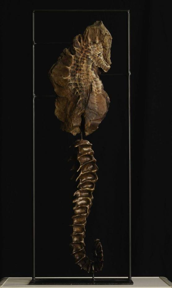 zeepaardje - Art in Nature 2019
