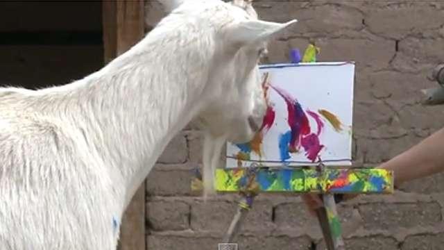 Рисунки козла Боди из США сравнивают с полотнами Ван Гога
