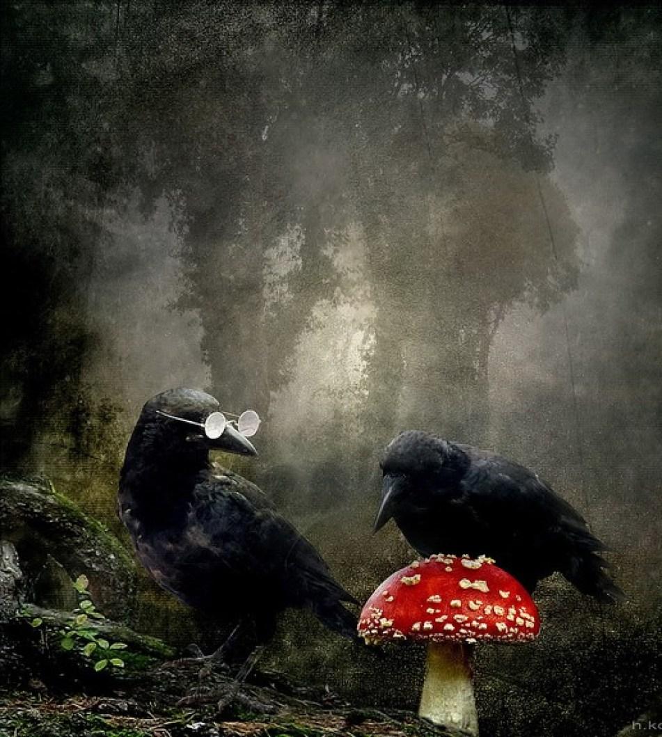 crows mushroom
