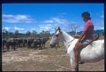 Ragazzo Makiritari che controlla le bufale