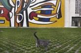 Passeggiata di un gatto davanti al mosaico monumentale