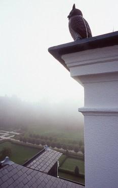 Mattinata nebbiosa dai tetti della villa