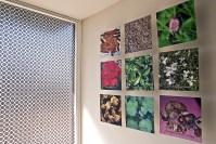 Foto di piante da cui si estraggono le essenze del profumo