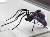 Natalia Lubieniecka, Purple Spider