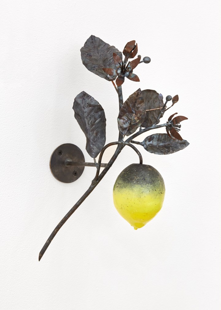 The Mask of Dionysus_Citrus Limon (After A. Pfieffer)_2