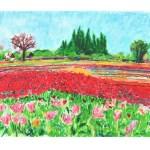 Wooden Shoe Tulip Fields
