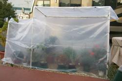 San Jose makeshift greenhouse
