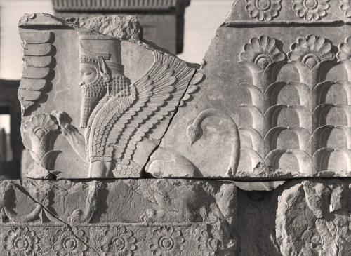 """""""Winged sphinx from the Palace of Darius at Persepolis, Iran,"""" from """"Persepolis: Images of an Empire,"""" at the Oriental Institute, 2016."""