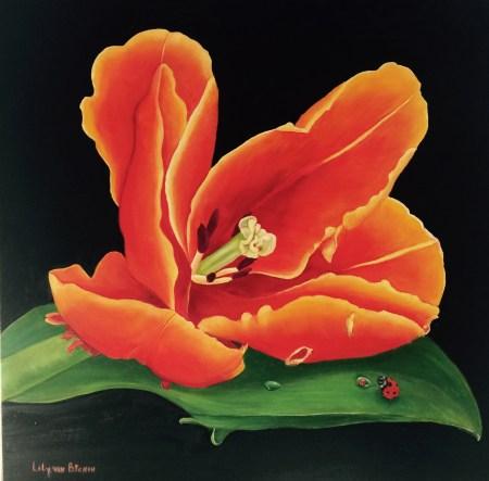 Tulp van Oranje