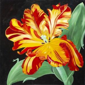 Dancing Parrot Tulip