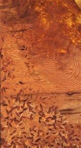 Fragments sur Mars ⓒ Léa Bagatella
