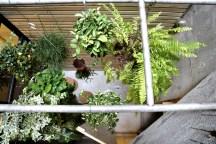 Mini Roof Garden, Image © Pon Ding