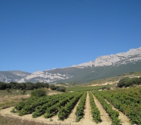 Las fuentes Vineyard at the slope of Sierra Cantabria range of mountains