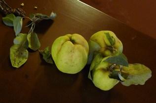 Kydonia (fruit) / Kydonia (city-state)
