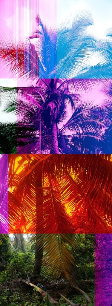 "Todd Gray ""Palm Crop Star"""