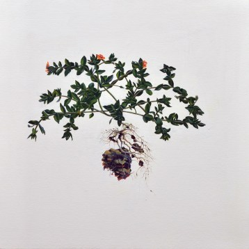 Andrea Bersaglieri, Pimpernel and Earth; Image courtesy of the artist