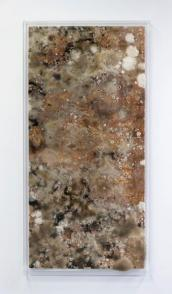 Amino Acids. Silas Inoue. Untitled. 2017. Mold on wood sealed in acrylic. 55 x 20 x 2 inches. Photo Courtesy of ACME Gallery.