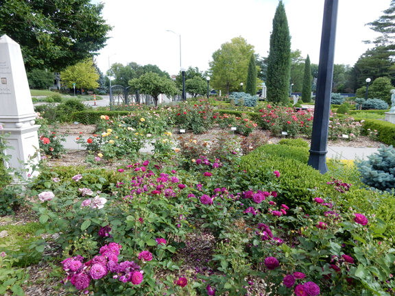Our Best Local Public Rose Garden