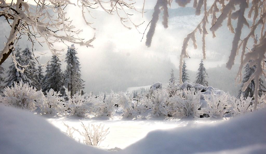 Morning Hoarfrost Winter Scene