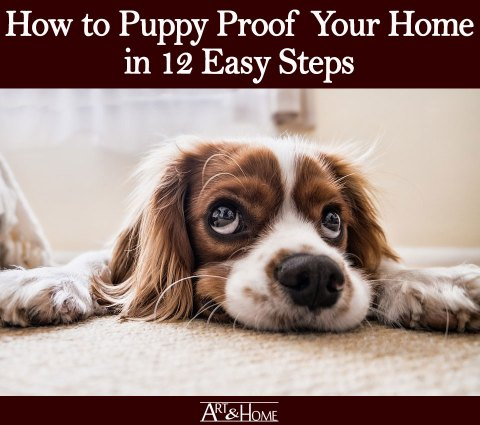 How to Puppy Proof Your Home | Safely Store All Medications