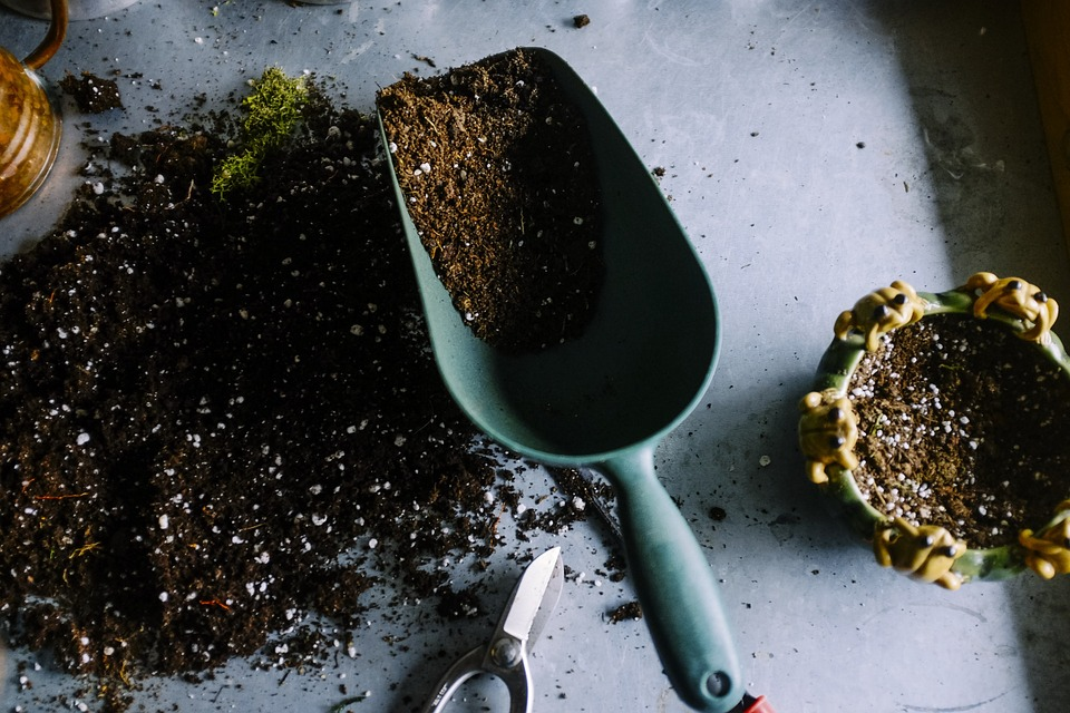 How to Use Coffee Grounds in Your Yard & Garden