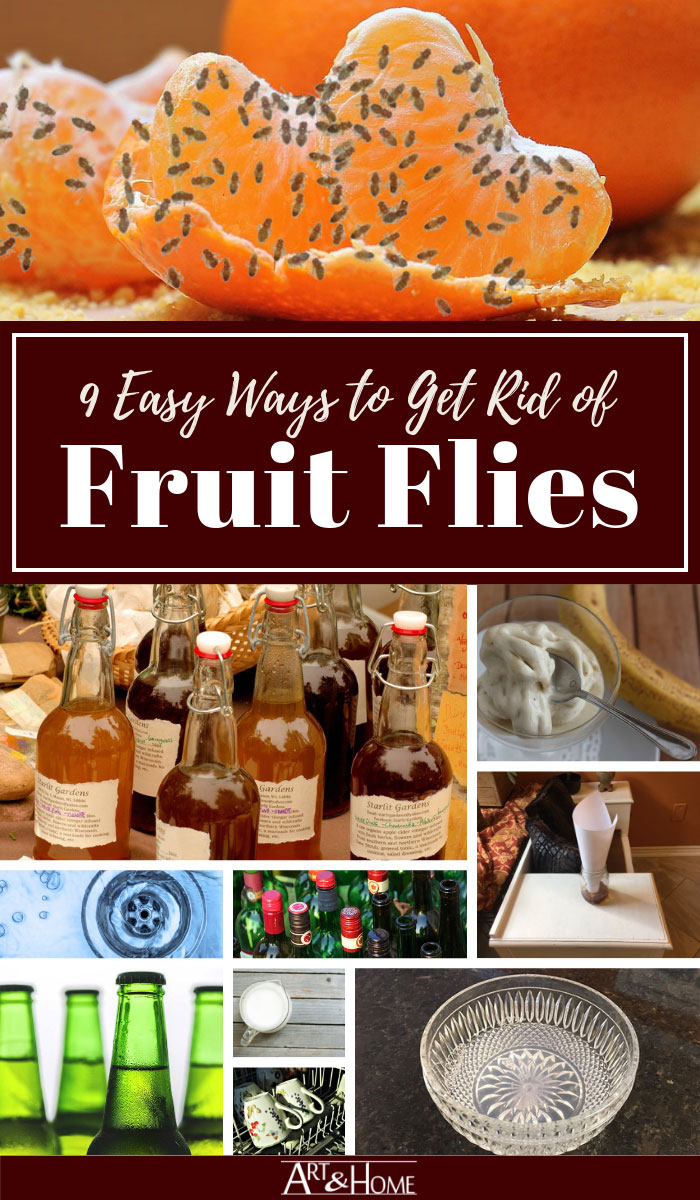 Easy Ways to Get Rid of Fruit Flies