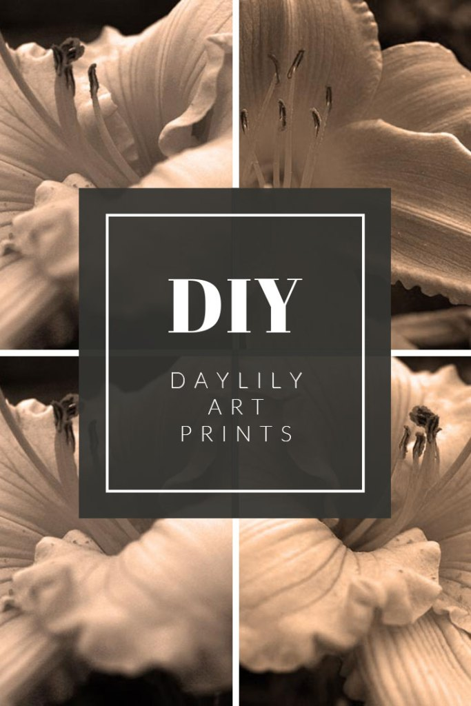 How to create you own DIY Daylily Art Prints using photos from your own garden.