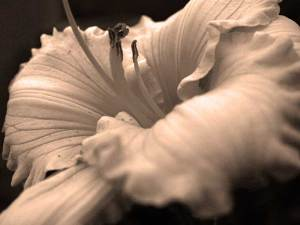 How to Create Your Own Daylily Photo Art