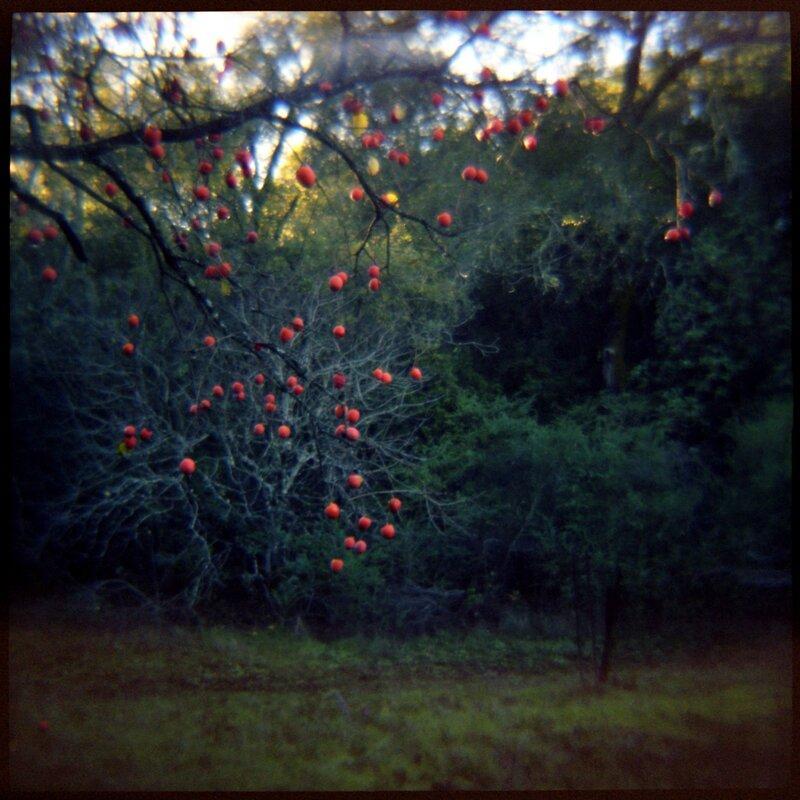 01 Winter Fruit Daniel Grant Photographic Print