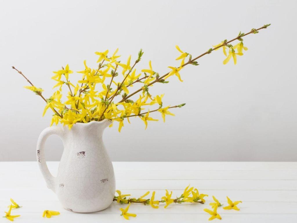 Bring Inside as Cut Flowers