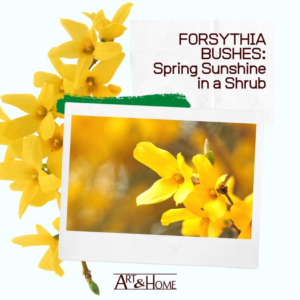 Forsythia Bushes – The Spring Sunshine of Flowering Shrubs
