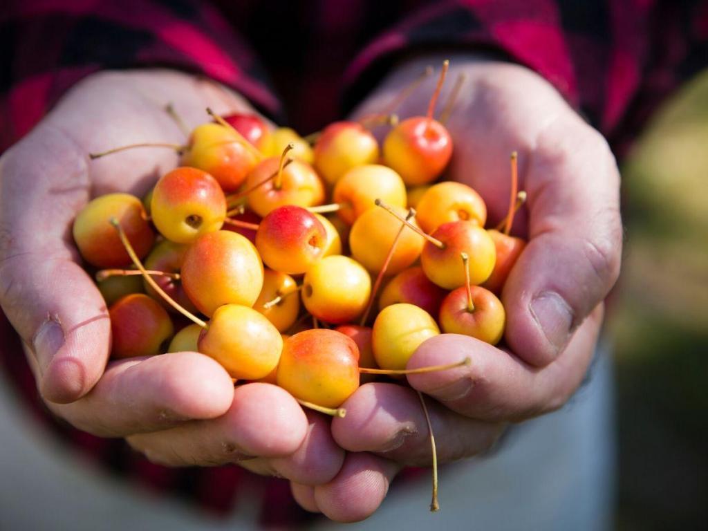 Small Crabapple Berries